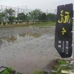 今年も参加!愛知の酒造好適米「夢吟香」の田植え体験。