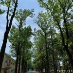 原料、仕込み、蒸留全てが愛知県三河産!芋焼酎「豊幻(HOGEN) 33度」