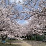 蓬莱泉の2つの秘蔵酒「 空(くう)生酒」「 吟(ぎん)生酒」2021年版は4月中旬頃入荷します!